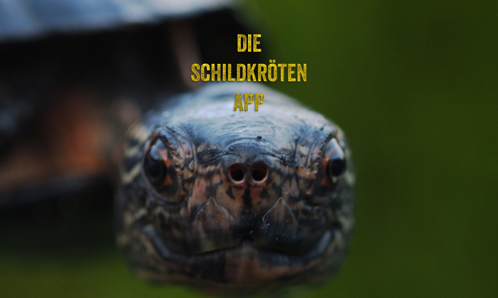Die Schildkröten App